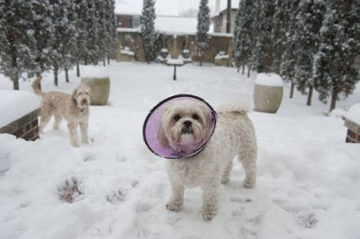 Photo: Two dogs play in the snow.