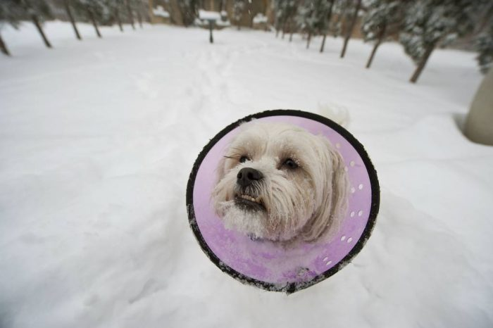 Photo: A dog plays in the snow.