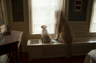 Photo: Two dogs look out a window in Lincoln, Nebraska.