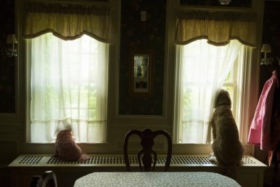 Photo: Two dogs look out the windows of a home in Lincoln, Nebraska.
