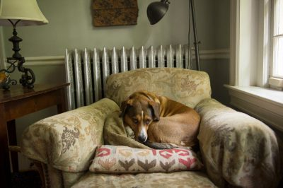 Photo: A dog rests in an over-sized chair in Washington, District of Columbia.
