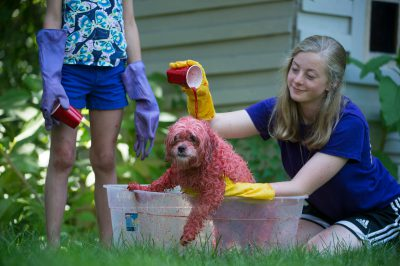 Photo: Ellen Sartore dyes her dog, Baxter pink, Lincoln, Nebraska.