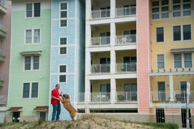 Photo: A man trains his South African mastiff at Virginia Beach, Virginia.