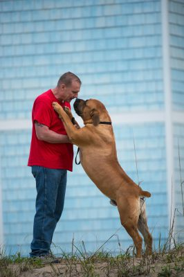 Photo: A man and his South African mastiff at Virginia Beach, Virginia.