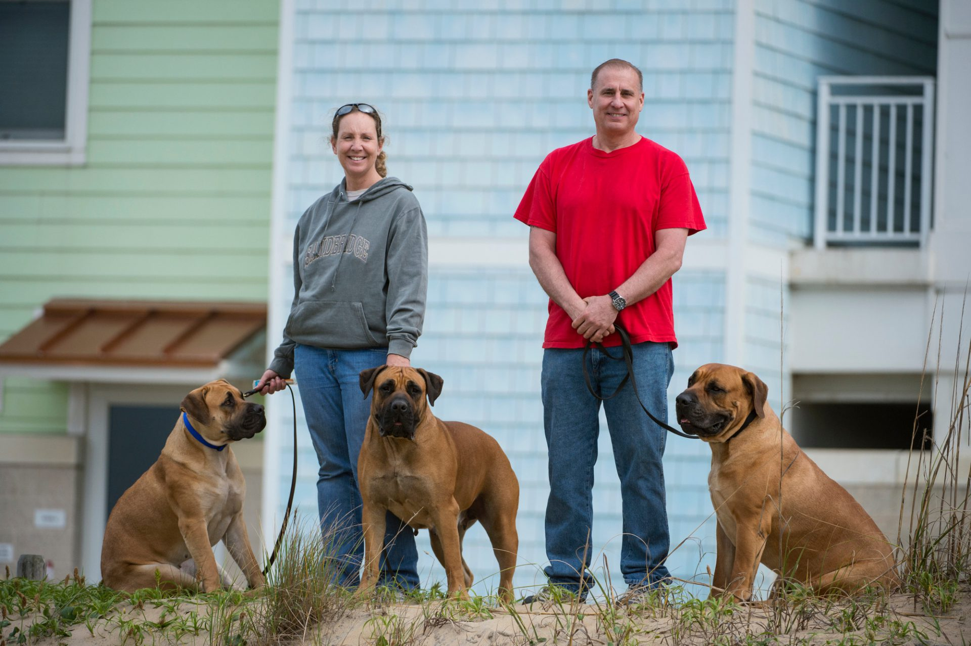 Photo: A man and woman with their three South African mastiffs at Virginia Beach, Virginia.
