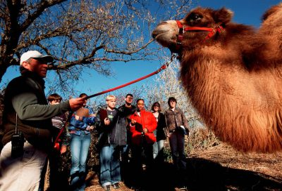"Photo: Students in the ""Zoo School"" at the Lincoln Children's Zoo interact with a dromedary camel."