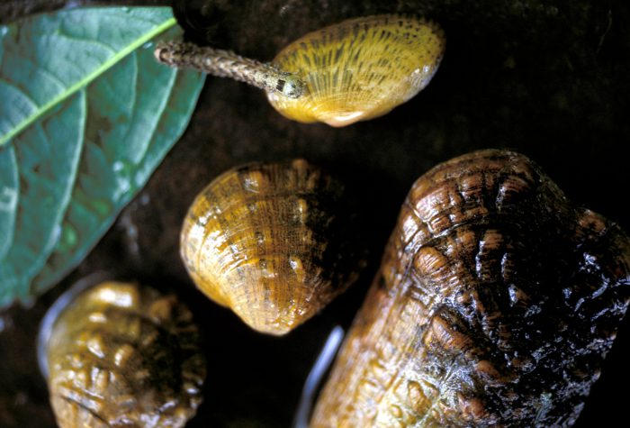 Photo: Endangered freshwater mussels from the Clinch River in Kentucky.