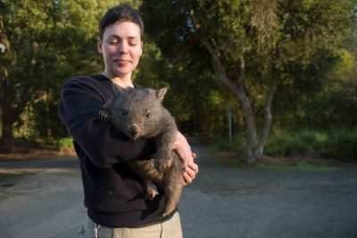 Photo: A zoo keeper with 'Poa', a ten-month-old common wombat baby she's handrearing at Healesville Sanctuary in Healesville, Victoria, Australia.