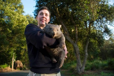 A zoo keeper with 'Poa', a ten-month-old common wombat (Vombatus ursinus tasmaniensis) baby she's handrearing at the Healesville Sanctuary.