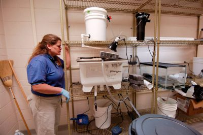 Photo: Associate curator of amphibians at the Detroit Zoo, as she watches over the Wyoming toad breeding facility.