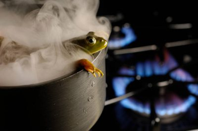 Composite photo illustration of a bullfrog (Lithobates catesbeiana) in a pot. (Compositing was used to avoid harming the frog.)