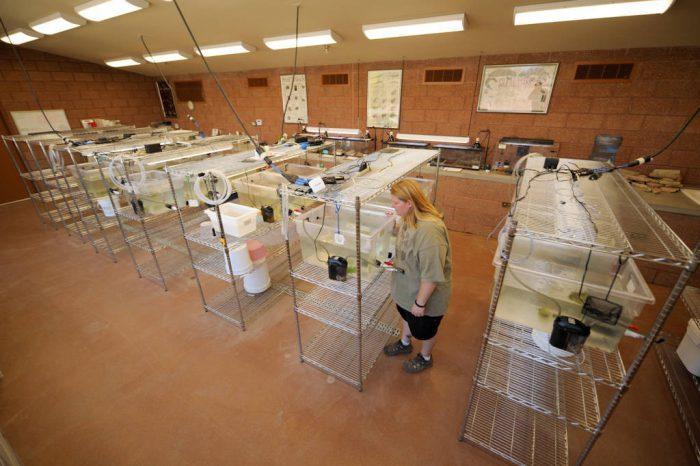 Photo: The senior keeper for herps, in the rare amphibians breeding area of the Phoenix Zoo.