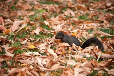 Photo: Black squirrel near The White House, Washington, DC.