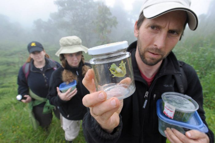"Tim Krynak holds up a specimen of a Ecuador cochran frog, Nymphargus griffithsi (IUCN: Vulnerable), a type of glass frog. Tim and his wife Kathy have been coming to this place near Mindo, Ecuador for several years to monitor amphibian life. The Krynaks and their team hope that chytrid fungus does not show up here, but know that many other parts of Ecuador have already seen catastrophic declines due to the fungus. ""Every time we come back, if it's quiet on that first night, we think, 'oh no'. We're scared. We think, this is it,"" said Tim."