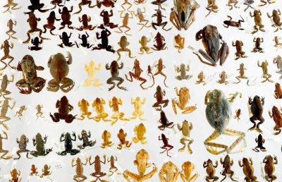 Photo: Extinct species of amphibians at Pontificia Universidad Catòlica in Quito, Ecuador.