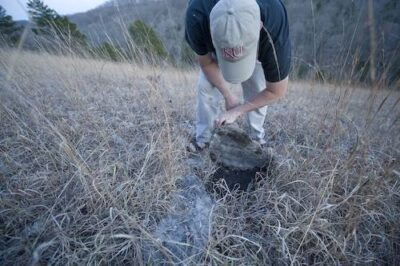 Photo: A biologist lifts rocks hunting for snakes in the Ozarks of southern Missouri.