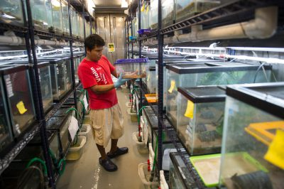 Photo: A man checks on the frogs at the Smithsonian Tropical Research Institute in Gamboa, Panama.