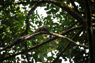 Photo: A squirrel on Bioko Island, Equatorial Guinea.