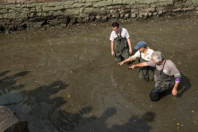 Photo: Zookeepers search for the critically endangered Yangtze giant softshell turtle (Rafetus swinhoei) in an enclosure at the Suzhou Zoo in China.