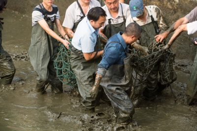 Photo: Zookeepers capture a critically endangered Yangtze giant softshell turtle (Rafetus swinhoei) in an enclosure at the Suzhou Zoo in China.