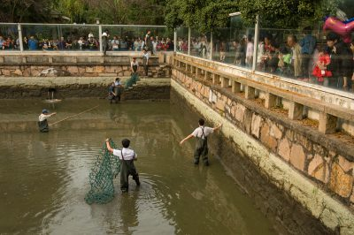 Photo: Zookeepers search an enclosure for a critically endangered Yangtze giant softshell turtle (Rafetus swinhoei) at the Suzhou Zoo in China.