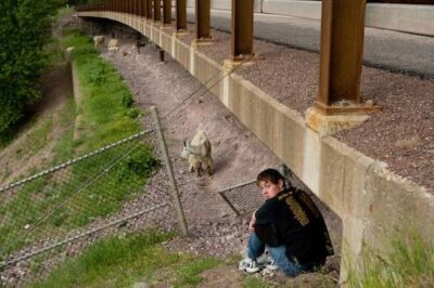 Picture of a young man watching mountain goats (Oreamnos americanus) in Glacier National Park, Montana.