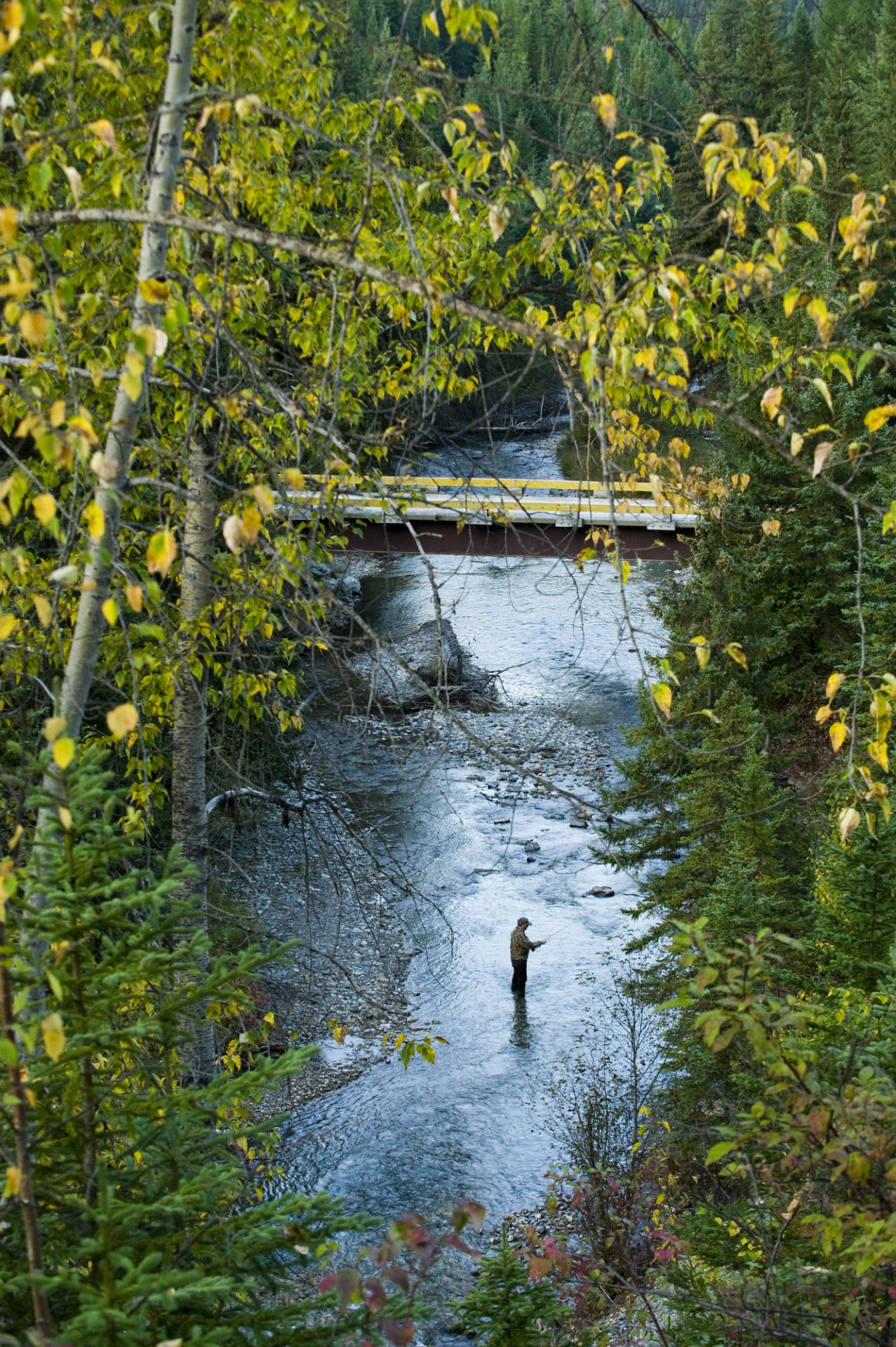 Photo: A fisherman in Bighorn Creek, part of the Kootenay River system.