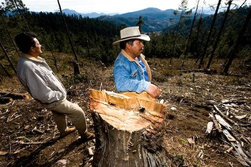 Photo: Logging has taken its toll on a former wintering roost for monarch butterflies near Angangueo, Mexico.