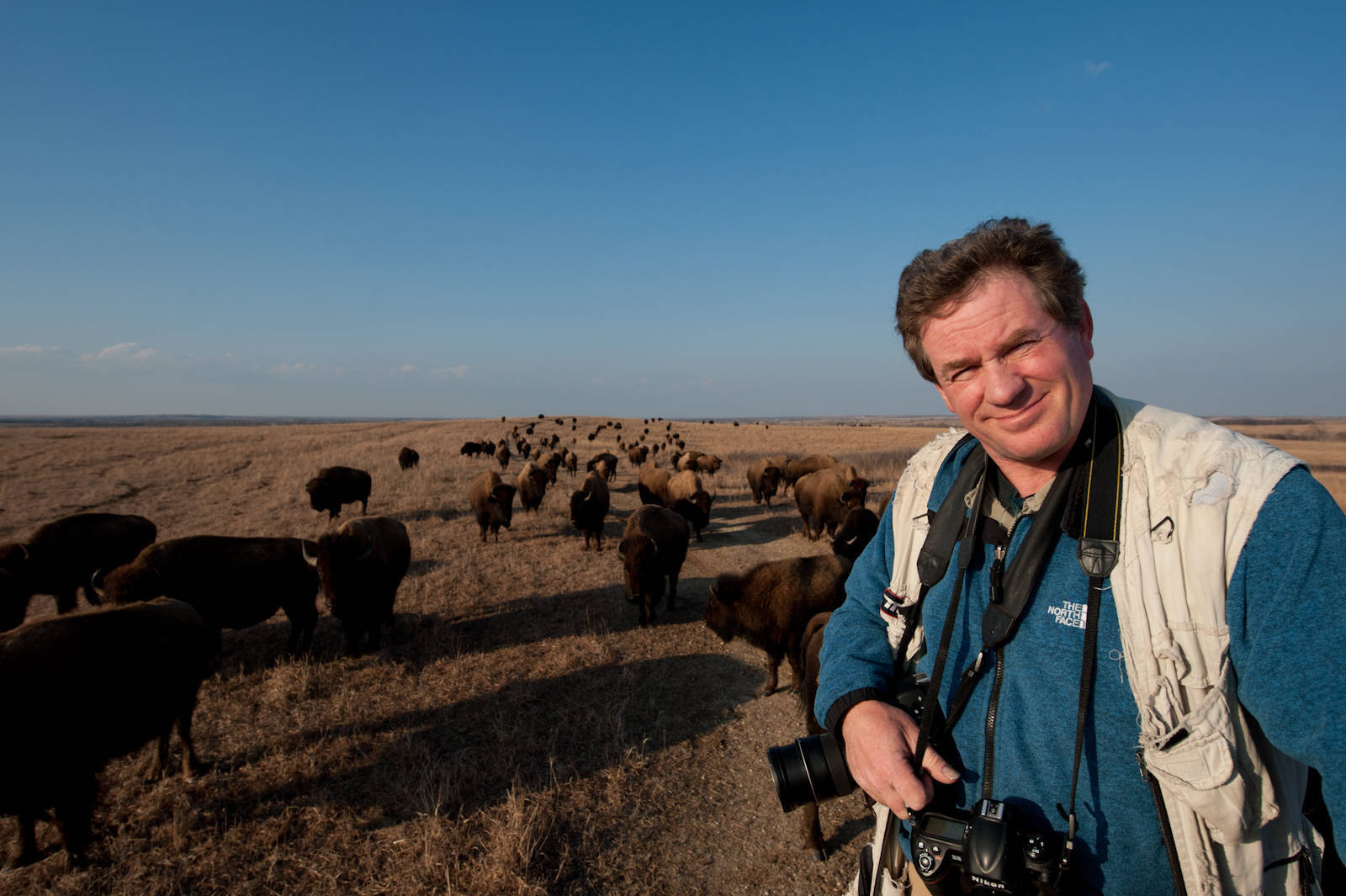 Photo: Joel Sartore, National Geographic photographer, standing amongst a herd of bison (Bison bison) on the prairie at Maxwell State Game Preserve in Canton, Kansas.