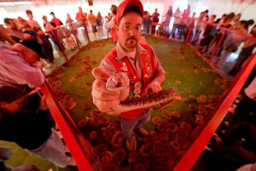 Photo: The snake pit at the 45th annual Mangum Rattlesnake Derby in Mangum, Oklahoma.