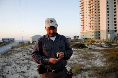 As part of a population survey, a member of USFWS holds a federally endangered Alabama beach mouse (Peromyscus polionotus ammobates) among man-made structures on the Fort Morgan Peninsula near Gulf Shores, AL.