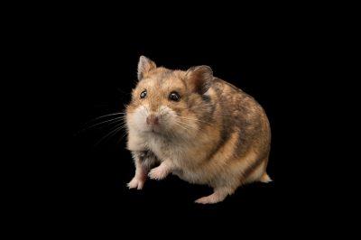 s hamster blonde mollige tiener porno