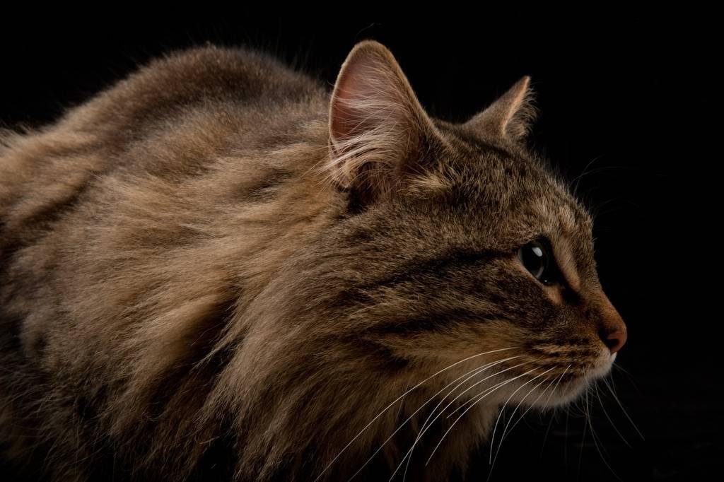 Photo: Rocket the cat.
