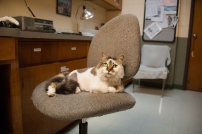 Photo: An office cat at the Gladys Porter Zoo in Brownsville, Texas.