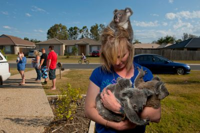 Photo: Sam and her partner Craig Coupland hand raise four orphaned koala babies in Ormiston, Australia.