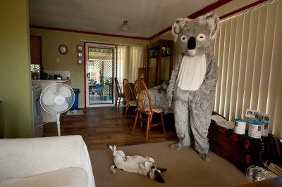 Photo: Dave Wistrom tries on a koala suit in his home Morayfield, Queensland.