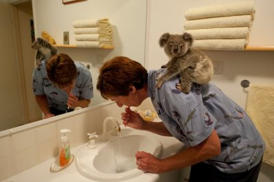 Photo: Anika Lehmann brushes her teeth as Talisa, a baby koala, looks on. Lehmann and her husband Henk are part of a network of people who foster orphaned young koalas in Queensland.