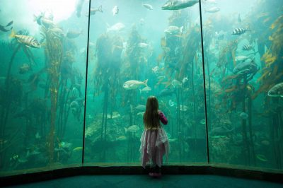 Photo: A young girl stands in front of the kelp tank at Two Oceans Aquarium in downtown Cape Town.