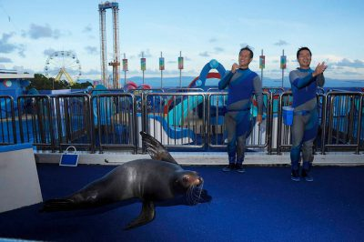 Photo: A California sea lion and trainers at the bottlenose dolphin and California sea lion show at Ocean Park.