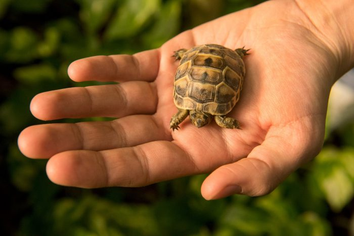 Photo: Baby tortoise at Parco Natura Viva in Bussolengo, Italy.