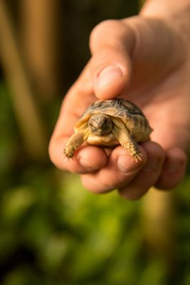 Photo: Baby tortoises at Parco Natura Viva in Bussolengo, Italy.