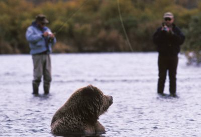 Photo: Photographers take pictures of a wild grizzly bear on the Kulik River in Alaska.