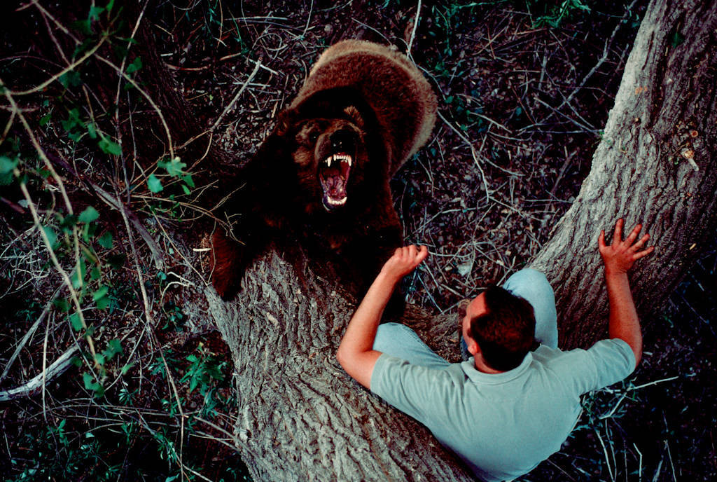 Photo: Trainer Scott Handley works with one of his bears in a park in California