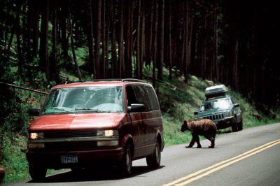 Photo: Tourists watch from cars as a grizzly bear as it crosses the road in Yellowstone National Park.