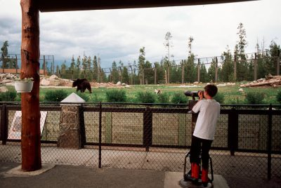 Photo: The Grizzly Discovery Center in West Yellowstone, Montana, allows tourists to see a grizzly bear up close, the safe way.