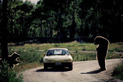 "Photo: At ""Bear World"" in Rexburg, Idaho, one grizzly stands upright peering into a car while another tries to hitch a ride."