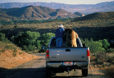 Photo: Scott Handley and Baloo the bear make the rounds of his California ranch.