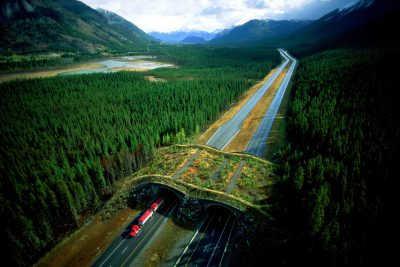 Photo: An overpass for wildlife (including bears) was built over this busy highway near Banff, Canada.