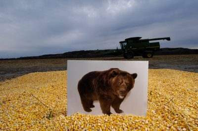 Photo: This was once the place where Lewis and Clark first saw a grizzly bear, but it is now a corn field.