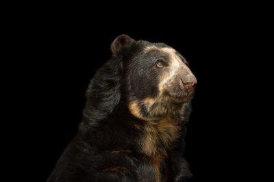cum-filled-bear-jamie-presley-gif